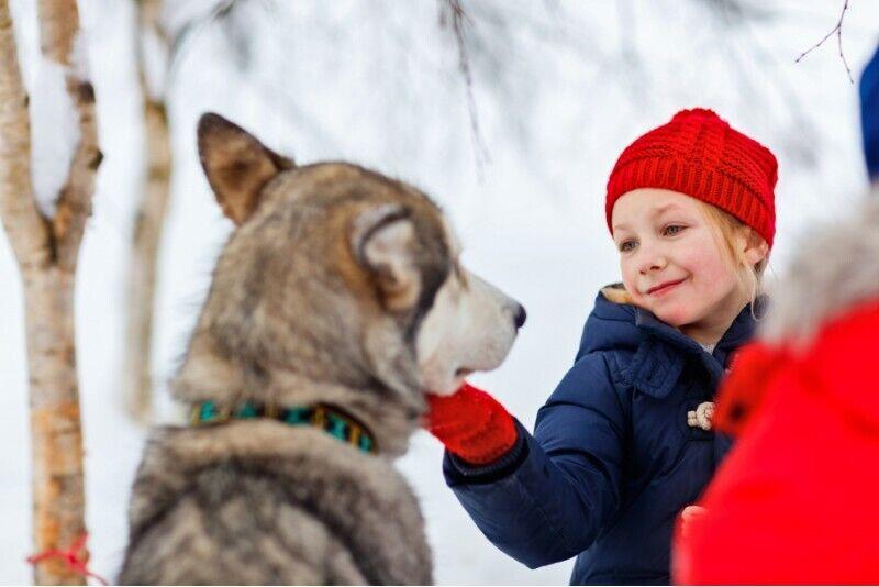 Wyprawa psim zaprzęgiem w Skrzeszewie