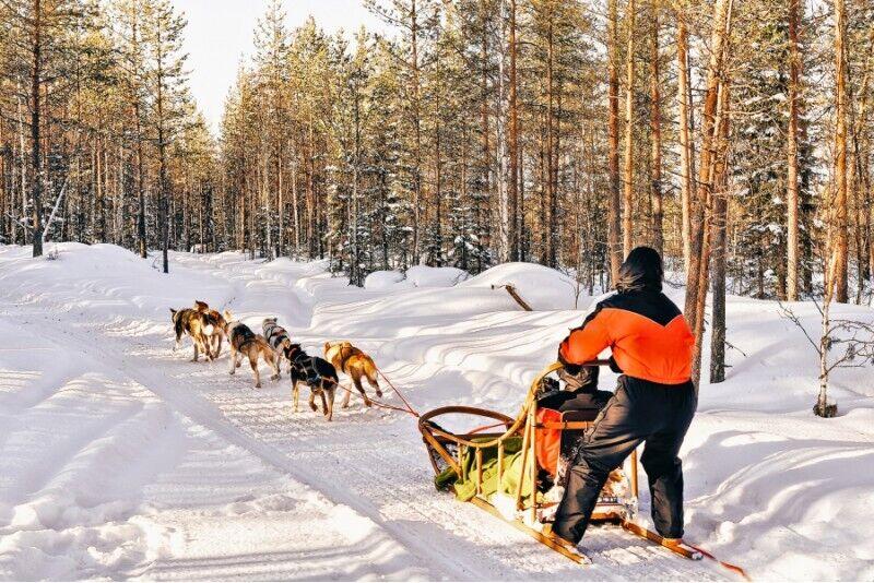 Przejażdżka psim zaprzęgiem w Lesie Kaszubskim