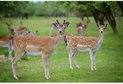 Rodzinne zakwaterowanie ze SPA i obiadem + karmienie jeleni w dworze Bistrampolis