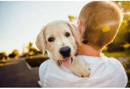 Kurs behawiorystyczny psów online