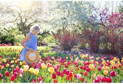 Online kurs projektowania ogrodów