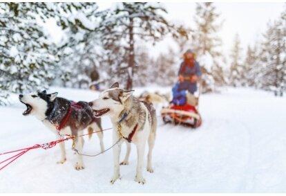 Przejażdżka psim zaprzęgiem zimą w Limanowie